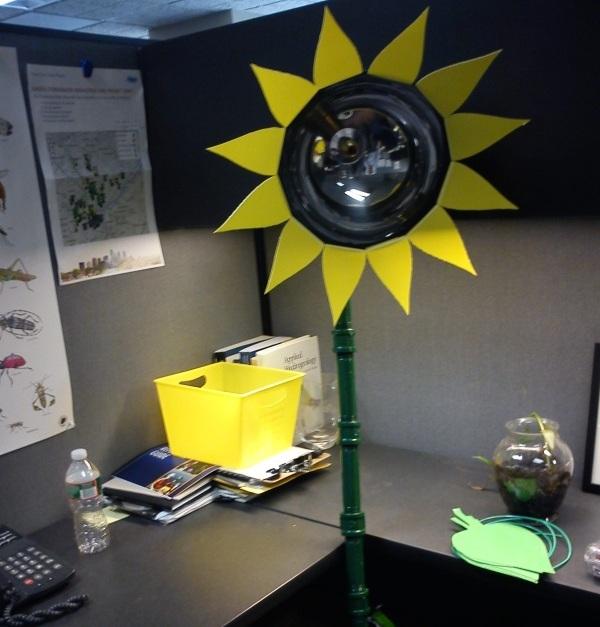 sunflower_petals