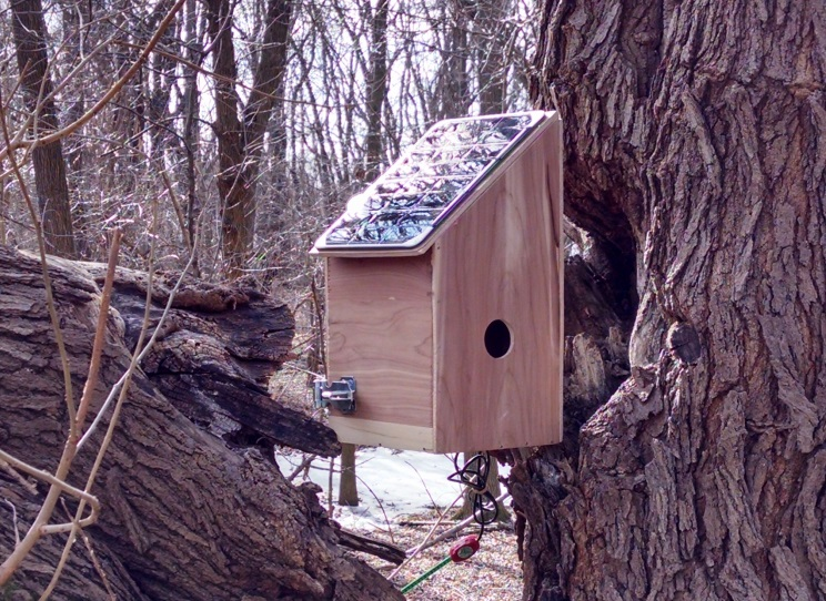greenSTEM_birdhouse_tree